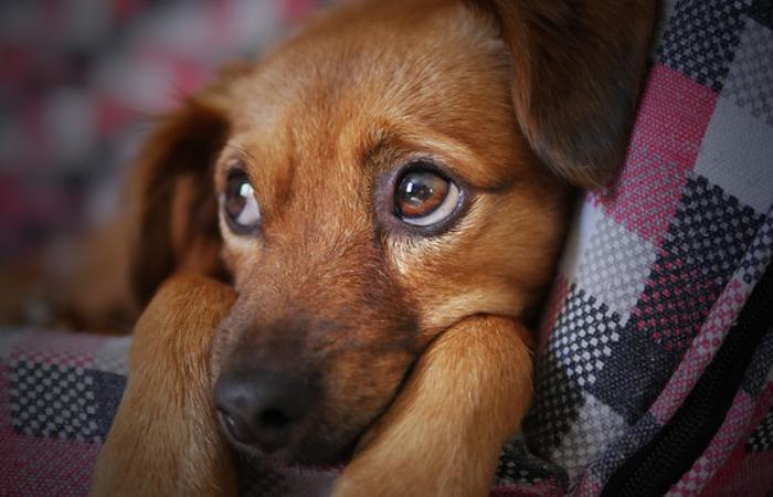 Міфи про правила вигулу домашніх собак