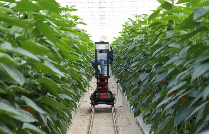 Зростаючі технологічні тенденції в сільському господарстві