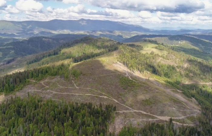 Країни Карпатського регіону під загрозою через незаконну вирубку лісів