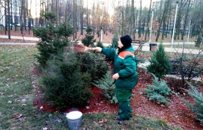 У Києві стартувала кампанія по захисту хвойних дерев від незаконної самовільної вирубки