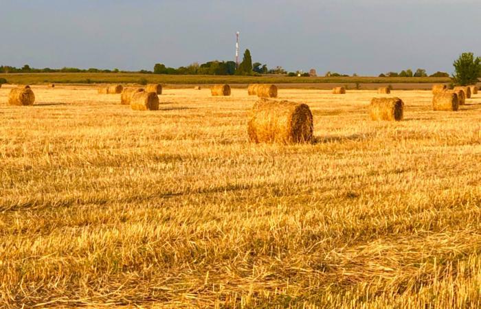 Земельна реформа в Україні з урахуванням міжнародного досвіду
