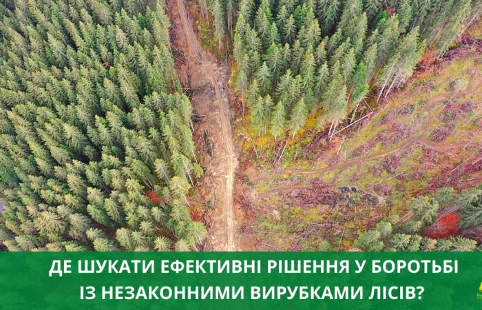 Де шукати ефективні рішення у боротьбі із незаконними вирубками лісів?