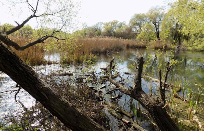 На території Совських ставків планують побудувати розважальний комплекс