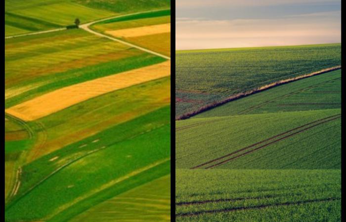 Українська земля: Лот продано?